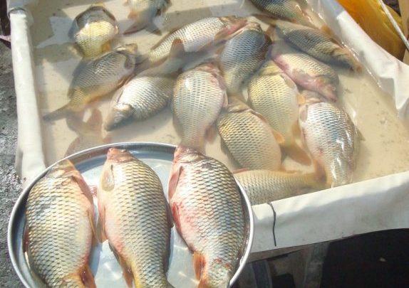تفسير رؤية شراء السمك في المنام للمفسرين مجلة المتكتك